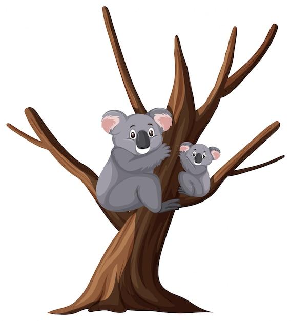 Dwa ślicznej Koali Na Drzewie Na Bielu Premium Wektorów