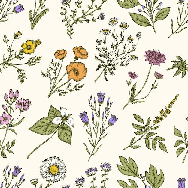 Dzikie Kwiaty I Zioła. Kwiatowy Wzór Premium Wektorów