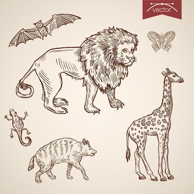 Dzikie Zoo Przyjazny Zestaw Zabawnych Ikon Zwierząt. Darmowych Wektorów