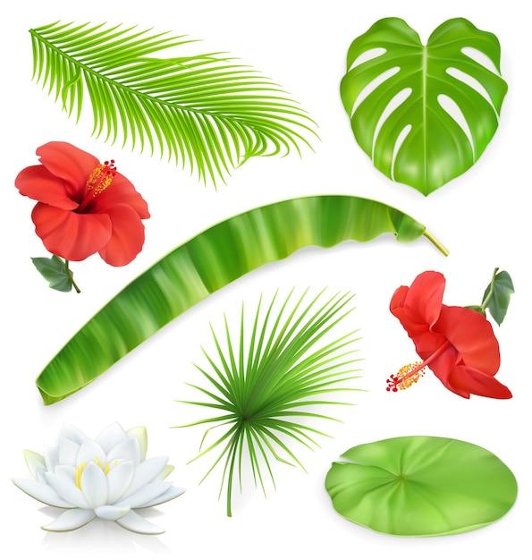 Dżungla. Zbiór Liści I Kwiatów. Rośliny Tropikalne. Ikony Premium Wektorów