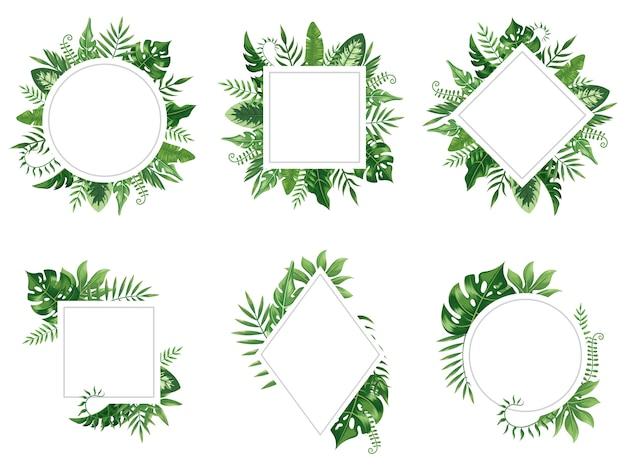 Egzotyczna Rama Liścia. Wiosna Pozostawia Karty, Tropikalne Drzewa Ramki I Vintage Na Białym Tle Zestaw Kwiatowy Dżungli Granicy Premium Wektorów