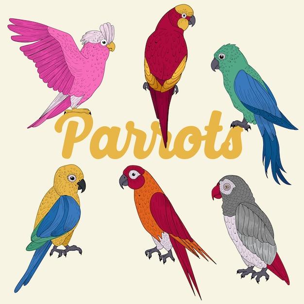 Egzotyczne Papugi. Ręcznie Rysowane Ilustracji W Wektorze Premium Wektorów