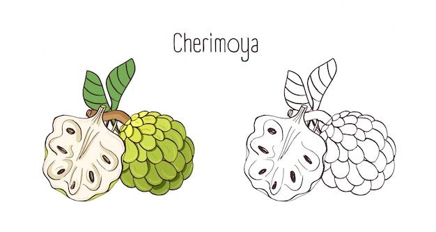 Eleganckie Kolorowe I Monochromatyczne Rysunki Konturowe Cherimoya Lub Custard Apple. Całe I Podzielone Dojrzałe Soczyste Pyszne Owoce Na Białym Tle. Premium Wektorów