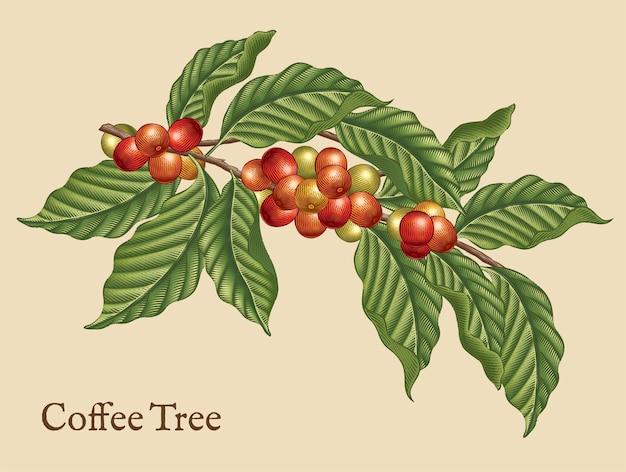 Elementy Drzewka Kawowego, Rośliny Kawowe Retro W Stylu Trawienia Cieniowania Kolorem Premium Wektorów