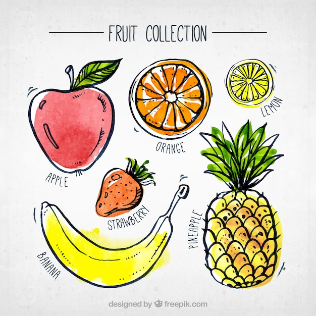 Fantastyczna Kolekcja Akwareli Kawałków Owoców Darmowych Wektorów