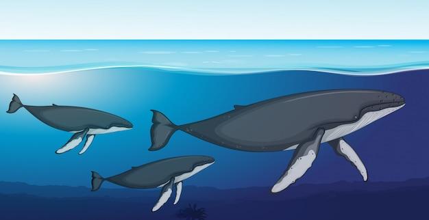 Fin wieloryba głęboko pod wodą Premium Wektorów