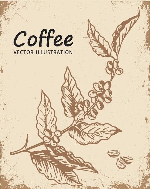 Gałąź drzewa kawy Premium Wektorów