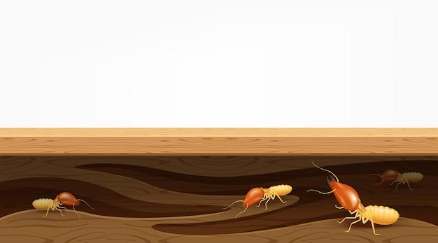 Gniazda Termitów W Desce, Termity Niszczą Stół Premium Wektorów