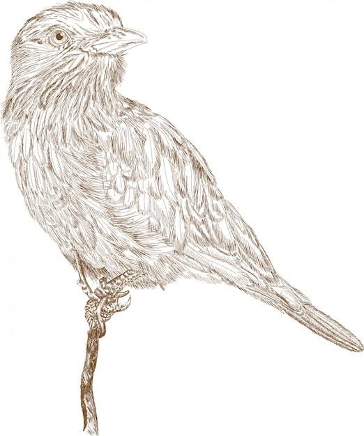 Grawerowanie ilustracja ptaka Premium Wektorów
