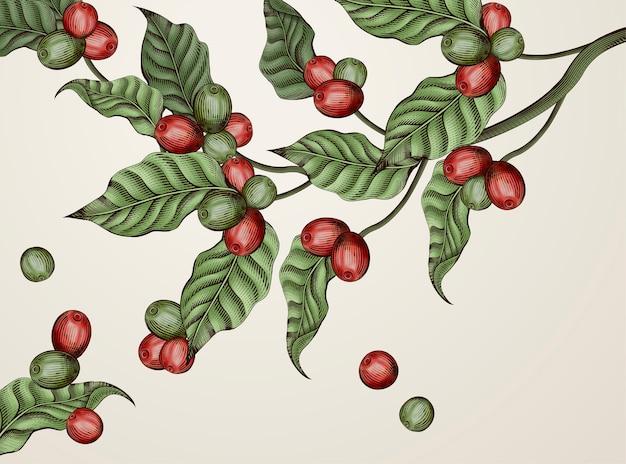 Grawerowanie Roślin Kawowych, Ozdobnych Liści Vintage I Wiśni Kawowych Do Zastosowań Premium Wektorów