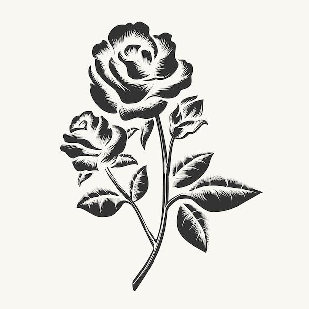 Grawerowanie róż czarny ręcznie rysowane Premium Wektorów