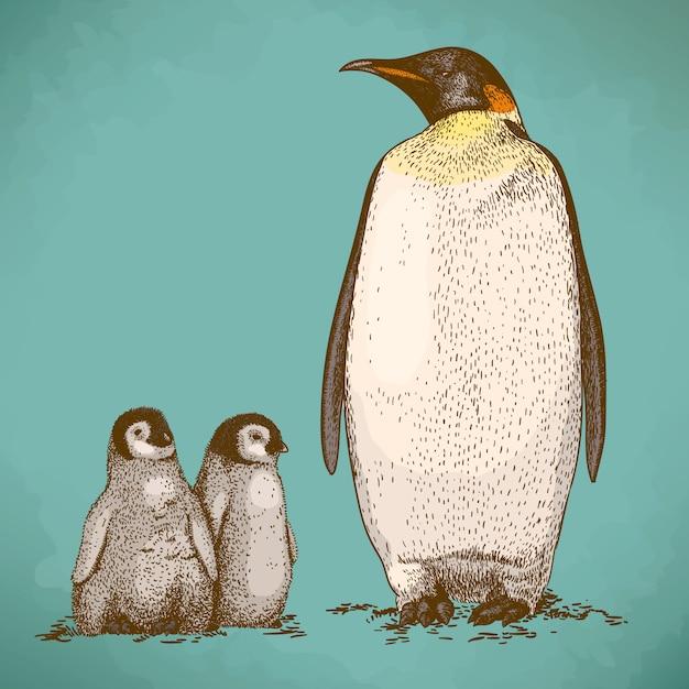 Grawerowanie rysunku trzech pingwinów królewskich Premium Wektorów