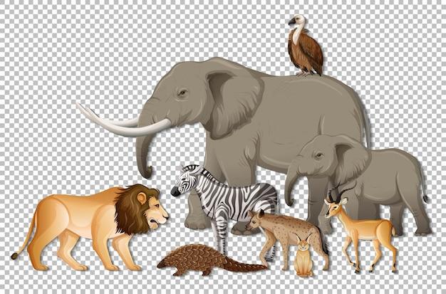 Grupa Dzikich Zwierząt Afrykańskich Na Przezroczystym Tle Darmowych Wektorów