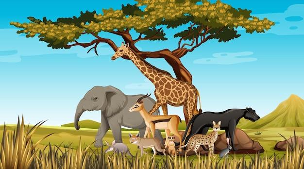 Grupa Dzikich Zwierząt Afrykańskich Na Scenie Lasu Premium Wektorów