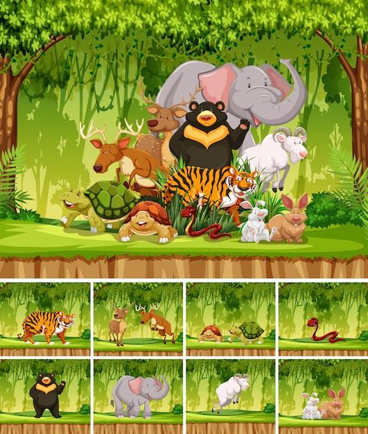 Grupa dzikich zwierząt w dżungli Premium Wektorów