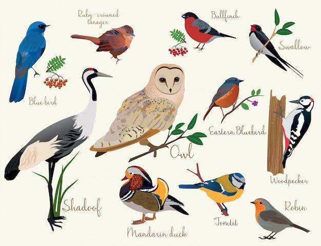 Ikony ptaków Premium Wektorów