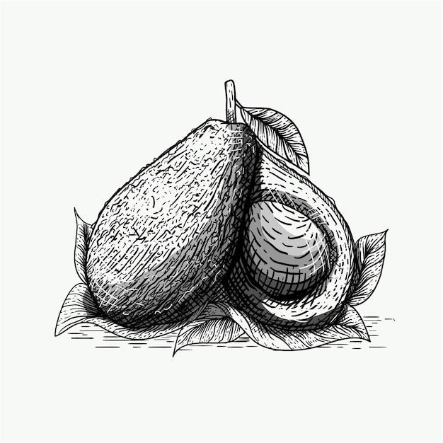 Ilustracja Awokado Ze Stylem Grawerowania Premium Wektorów