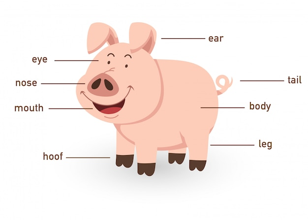 Ilustracja Części Ciała Słownictwa świni Premium Wektorów