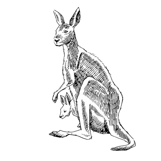 Ilustracja Dłoni Kangura Premium Wektorów