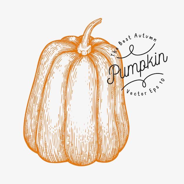 Ilustracja dyni. ręcznie rysowane ilustracji wektorowych warzyw. grawerowany styl halloween lub święto dziękczynienia Premium Wektorów
