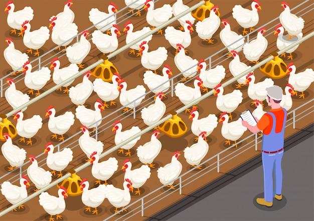 Ilustracja Izometryczny Drobiu Z Członkiem Personelu Na Fermie Kurcząt Kontrolujących Karmienie Ptaków Darmowych Wektorów