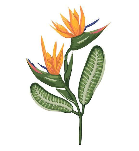 Ilustracja Kolorowy Tropikalny Kwiat Na Białym Tle. Strelizia W Stylu Przypominającym Akwarele. Egzotyczny Kwiatowy Szczegółowy Rysunek. Element Projektu Zwrotnika Premium Wektorów