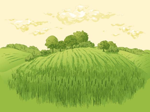 Ilustracja krajobraz pola pszenicy wiejskiej Premium Wektorów