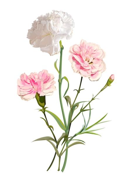Ilustracja Kwiat Goździka Premium Wektorów