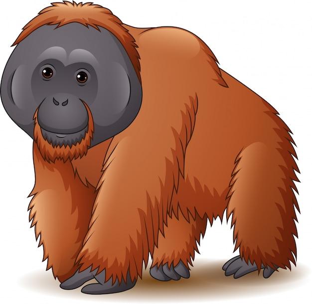 Ilustracja odizolowywająca na białym tle orangutan Premium Wektorów