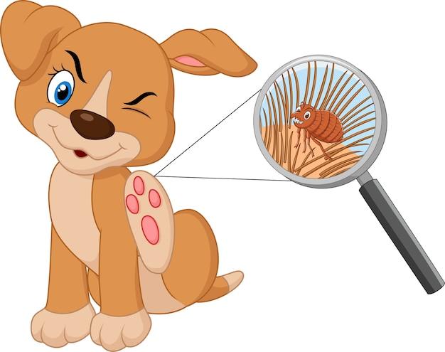 Ilustracja Pcheł Zarażony Pies Premium Wektorów