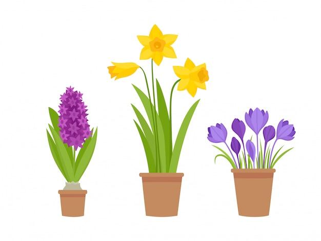 Ilustracja Pierwsze Wiosenne Kwiaty W Doniczce Na Białym Tle. Premium Wektorów