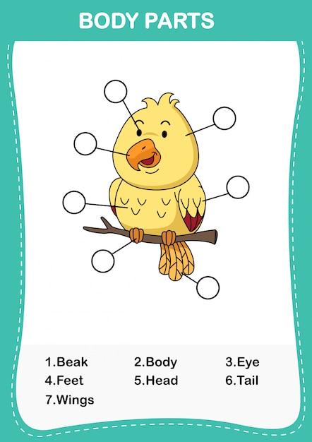 Ilustracja Ptasiej Części Ciała, Zapisz Poprawną Liczbę Części Ciała Premium Wektorów