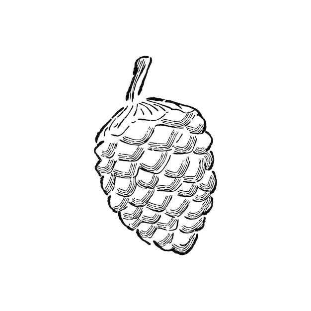 Ilustracja Roślin Darmowych Wektorów