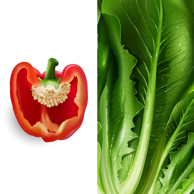Ilustracja Sałata I Pomidor Premium Wektorów