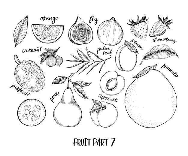 Ilustracja - Zbiór Owoców Tropikalnych I Egzotycznych. Elementy Zdrowej żywności. Premium Wektorów