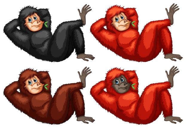 Ilustracja zestaw orangutans Darmowych Wektorów