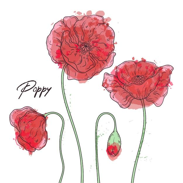 Ilustracje Botaniki Kwiatowej. Szkice Kwiatów Maku. Premium Wektorów