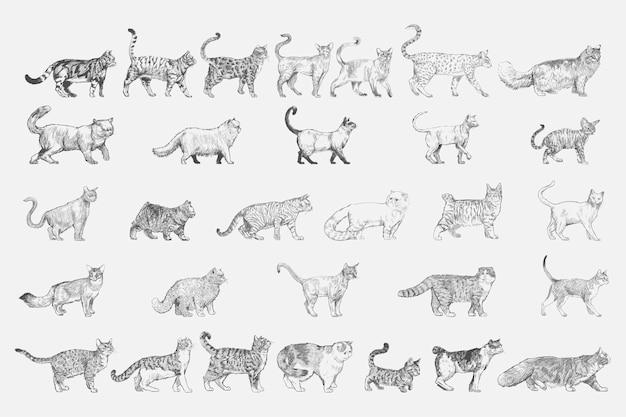 Ilustracyjny rysunkowy styl kot hoduje kolekcję Darmowych Wektorów