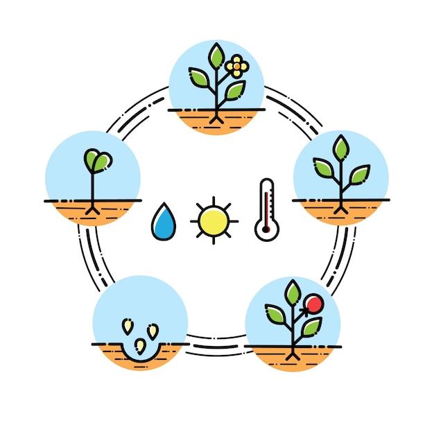 Infografiki Etapy Wzrostu Roślin Sadzenie Owoców, Proces Warzyw. Płaski Styl Premium Wektorów