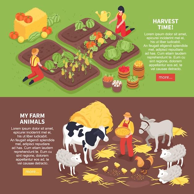 Izometryczne Poziome Bannery Zestaw Ze Zwierzętami Hodowlanymi I Rolników Zbierających Zbiory 3d Na Białym Tle Darmowych Wektorów