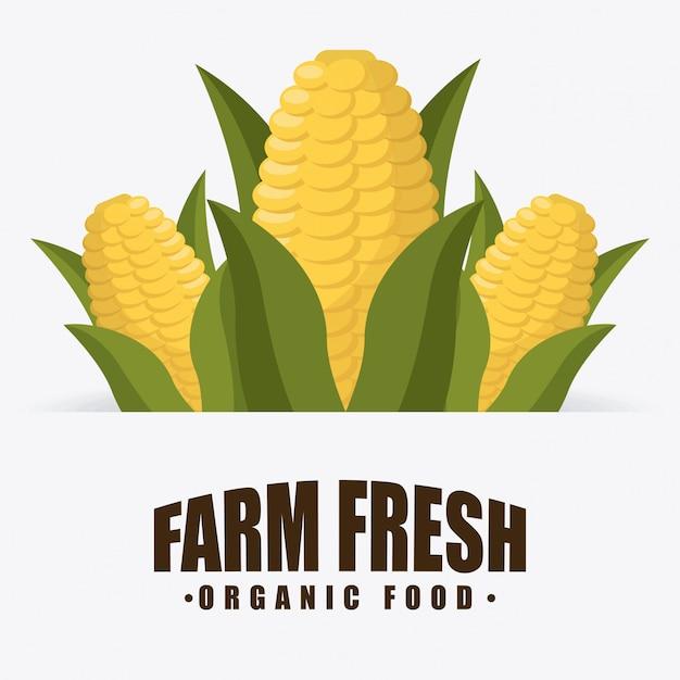 Jedzenie Organiczne Darmowych Wektorów
