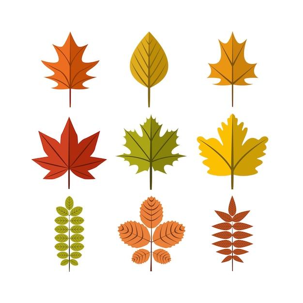 Jesień Liść Ilustracja Symbol Graficzny Zestaw Szablon Projektu Premium Wektorów