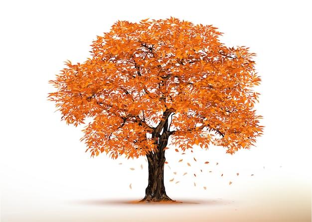 Jesienne Drzewo. Realistyczne Drzewa Na Białym Tle. Premium Wektorów