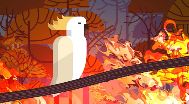 Kakadu Siedzący Na Gałęzi Pożary Lasów W Australii Zwierzęta Giną W Pożarze Buszu Pożary Drzewa Katastrofa Naturalna Intensywne Pomarańczowe Płomienie Poziome Premium Wektorów