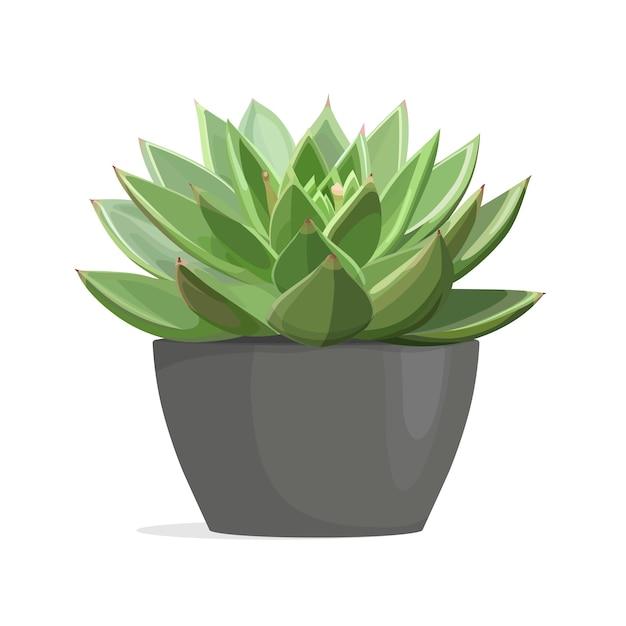 Kaktus Echeveria Premium Wektorów