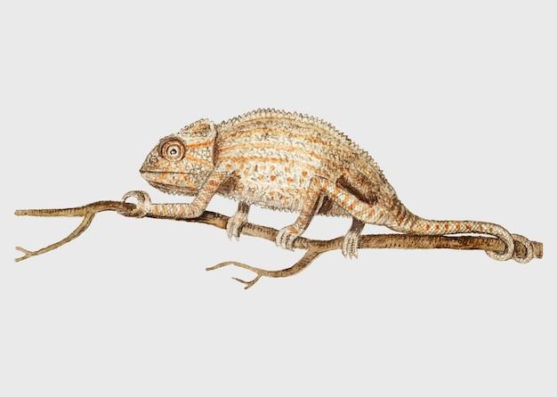Kameleon w stylu vintage Darmowych Wektorów