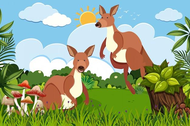 Kangury W Scenie Przyrody Premium Wektorów