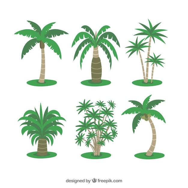 Kilka Tropikalnych Palm Darmowych Wektorów