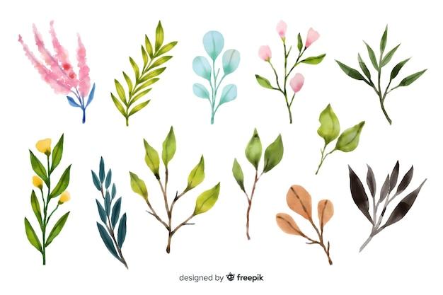 Kolekcja akwarela gałąź kwiatowy Darmowych Wektorów