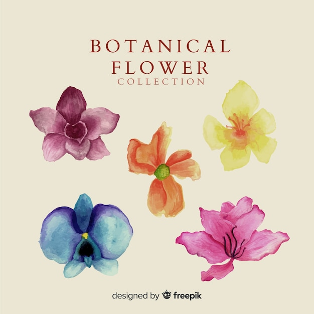 Kolekcja akwarela kwiatów Darmowych Wektorów